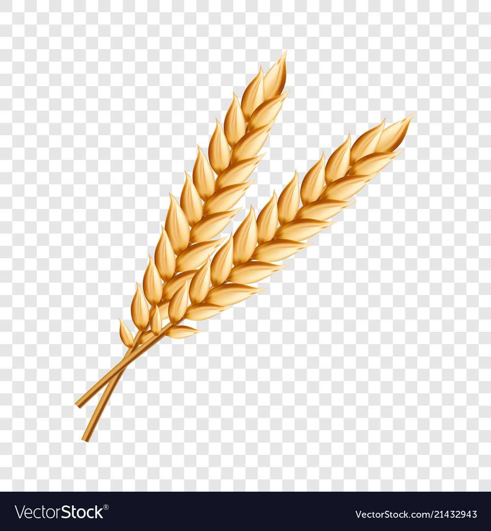 Wheat icon realistic style