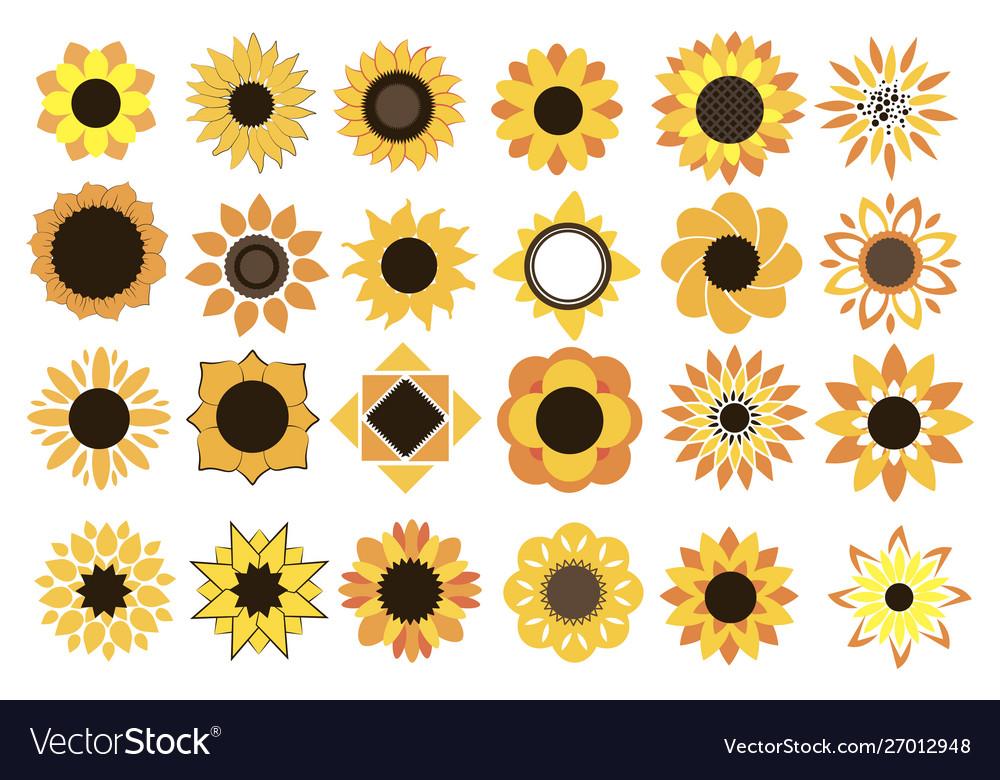 Set sunflower flowers collection cartoon