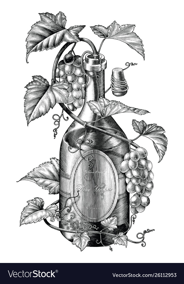Grapes twing in wine bottle black and white clip