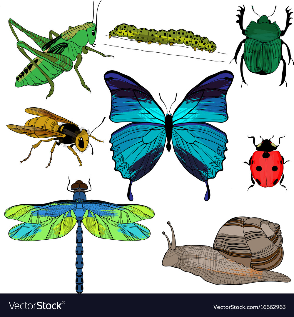 Colorful drawing insects collection Royalty Free Vector