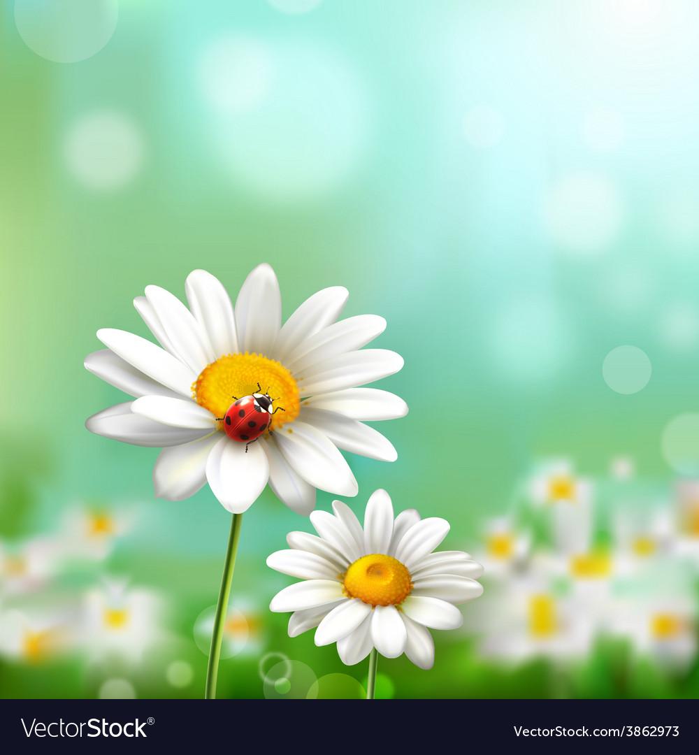 Daisies With Ladybug