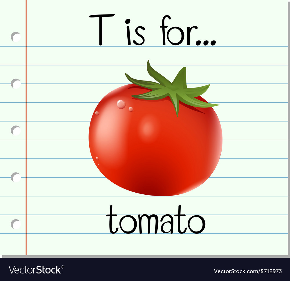 Flashcard Letter T Is For Tomato Vector Image