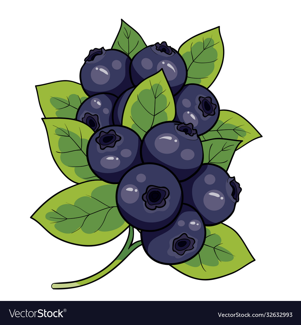 Blueberry bush with green leaves isolated object