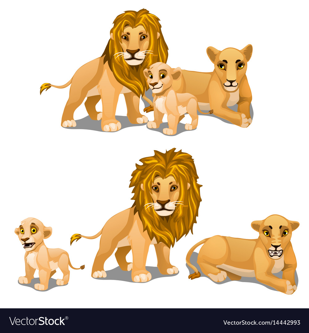 Family lions mother father and baby