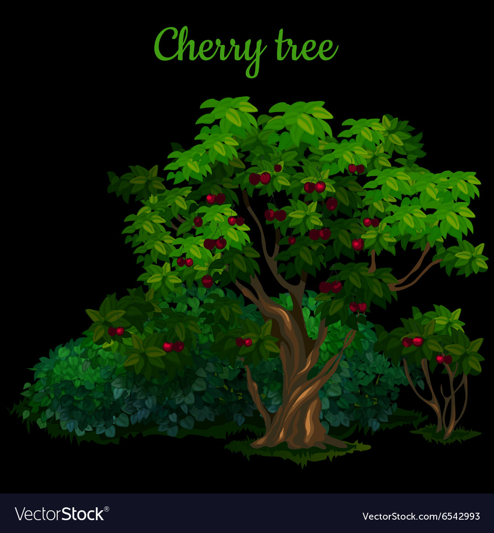 Green cherry tree isolated on black background