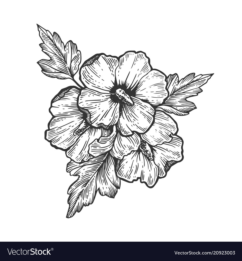 Hibiscus Flower Engraving Royalty Free Vector Image