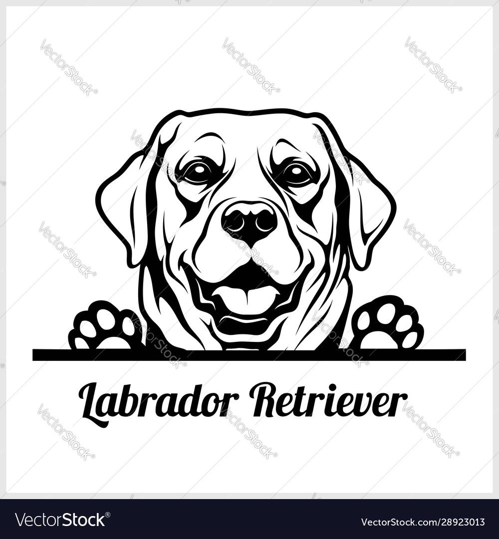 Dog head labrador retriever breed black