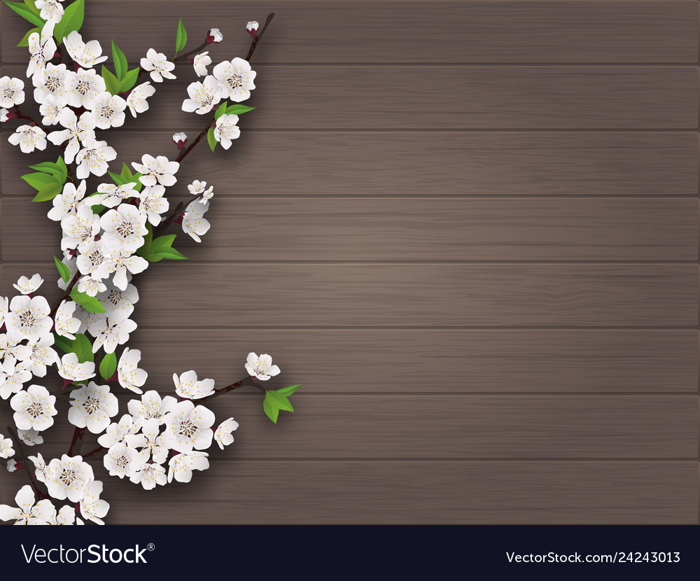 Spring blooming branch on old wooden background