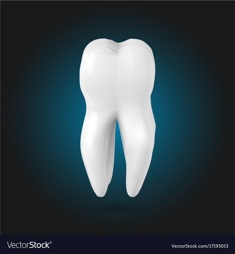 tooth realistic 3d teeth template royalty free vector image
