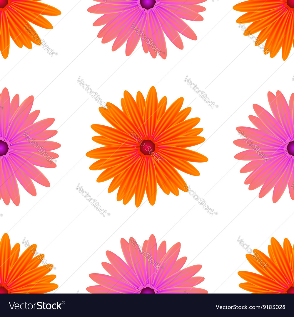 Spring Pink Orange Flowers Isolated Royalty Free Vector