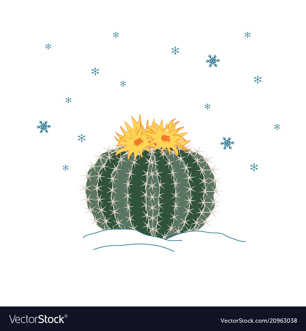 Winter cactus with flowers and snowflakes sky new