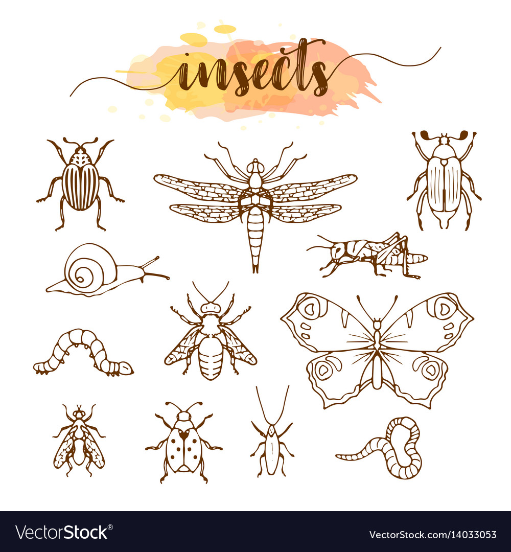 Set of insects doodle sketch
