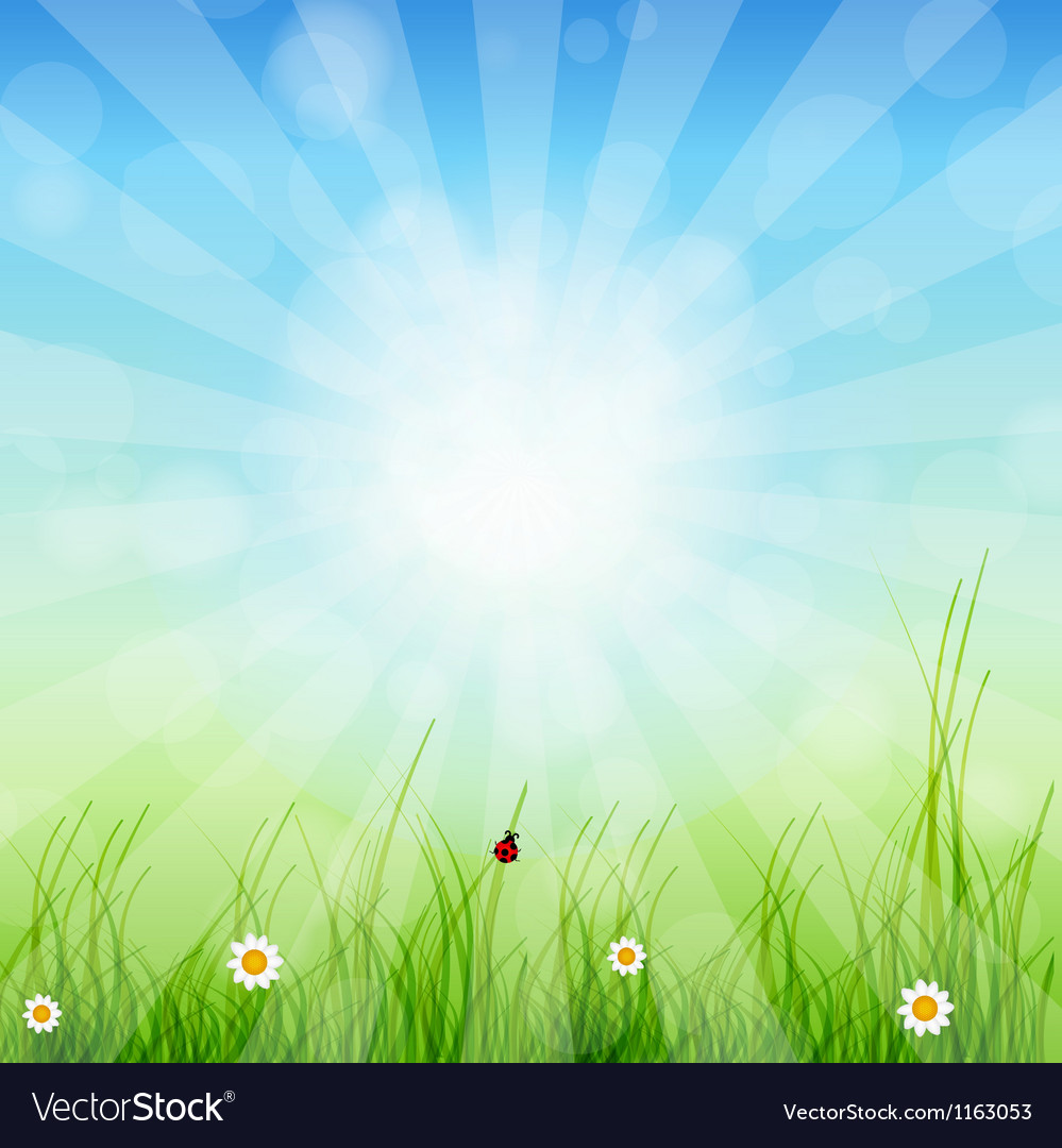 Spring green background Grass and sun vector image