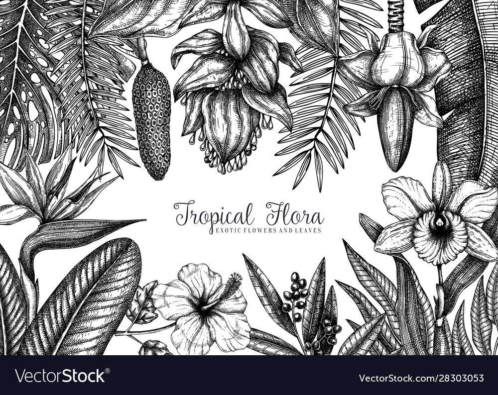 Tropical plants frame design exotic flowers