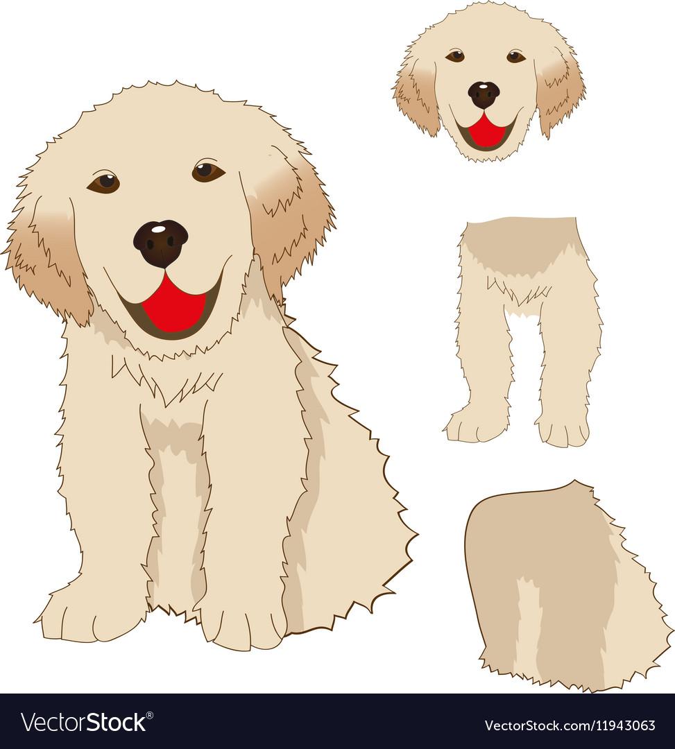 Labrador Golden Retriever Dog