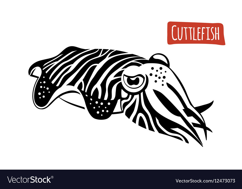 Cuttlefish black and white vector image