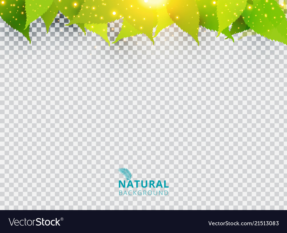 Spring summer natural green background