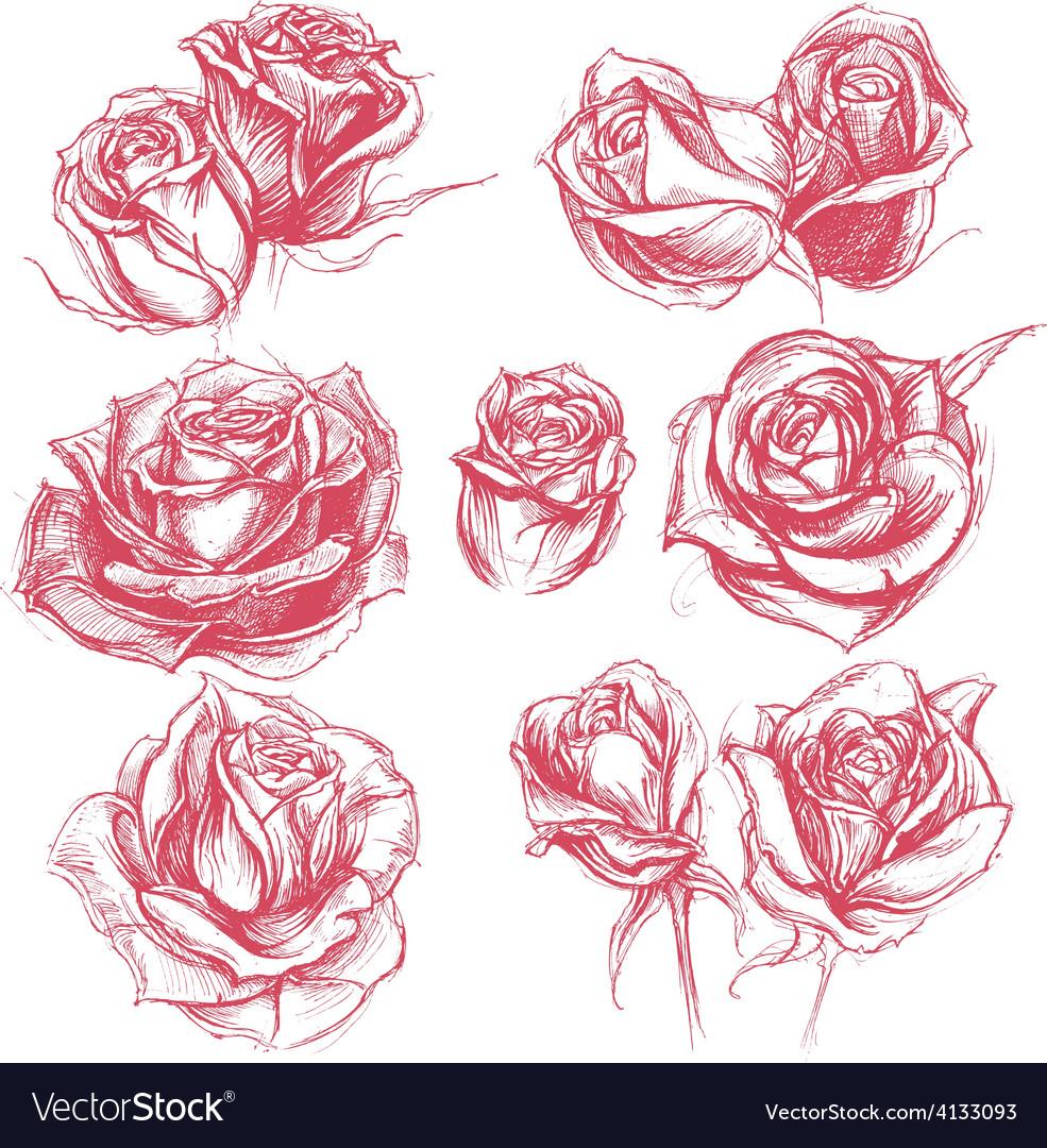 Roses Drawing Set vector image