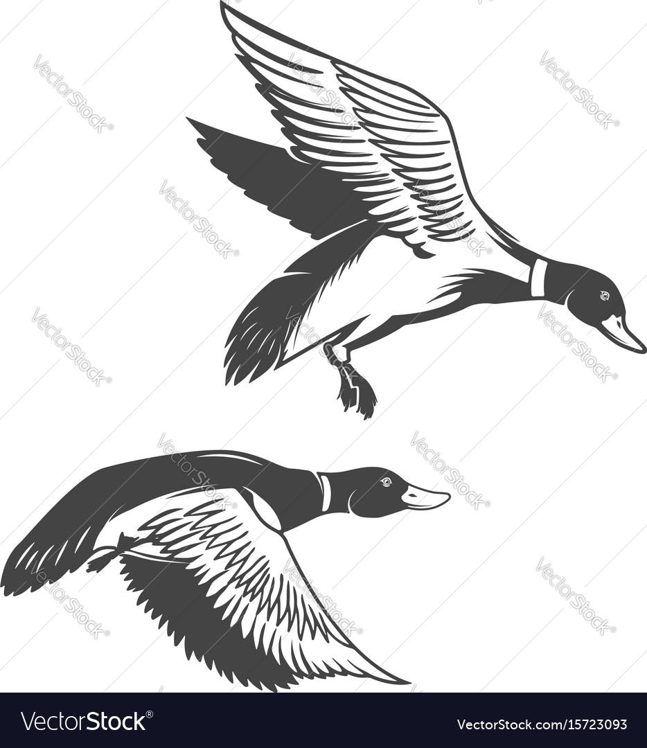 Set of wild ducks icons isolated on white