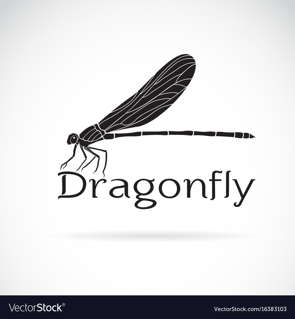 Vestalis gracilis dragonflyamphipterygidae on vector image