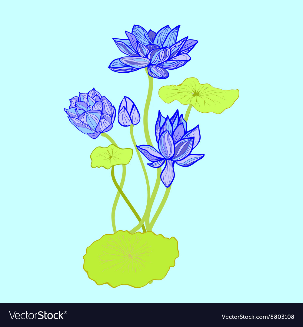 Background of Beautiful hand drawn lotus flowers a