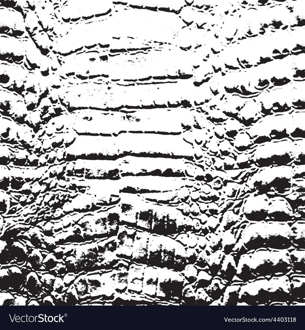 Crocodile Skin vector image