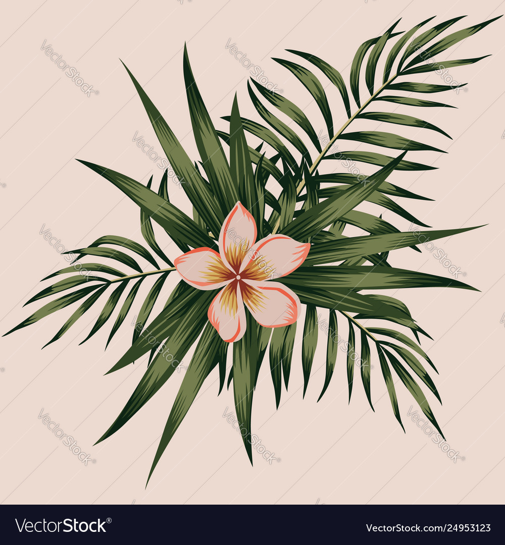 Plumeria and leaves composition spring