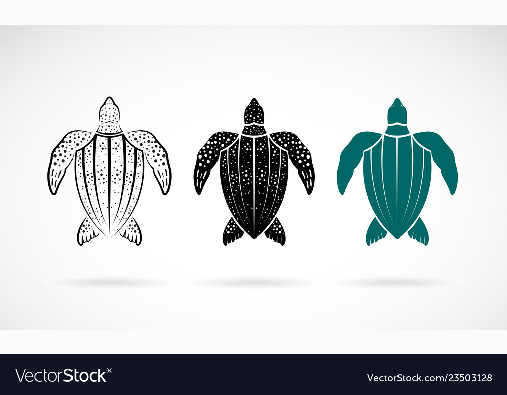 Gooseberry Turtle Design On White Background Sea Vector Image