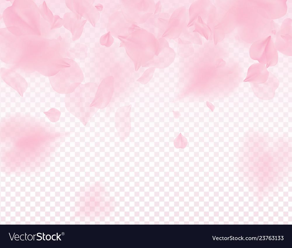 Pink sakura petals transparent background a lot