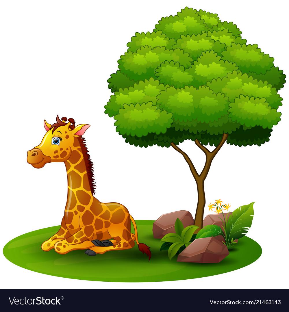 Cartoon Giraffe Sitting Under A Tree On A White Ba