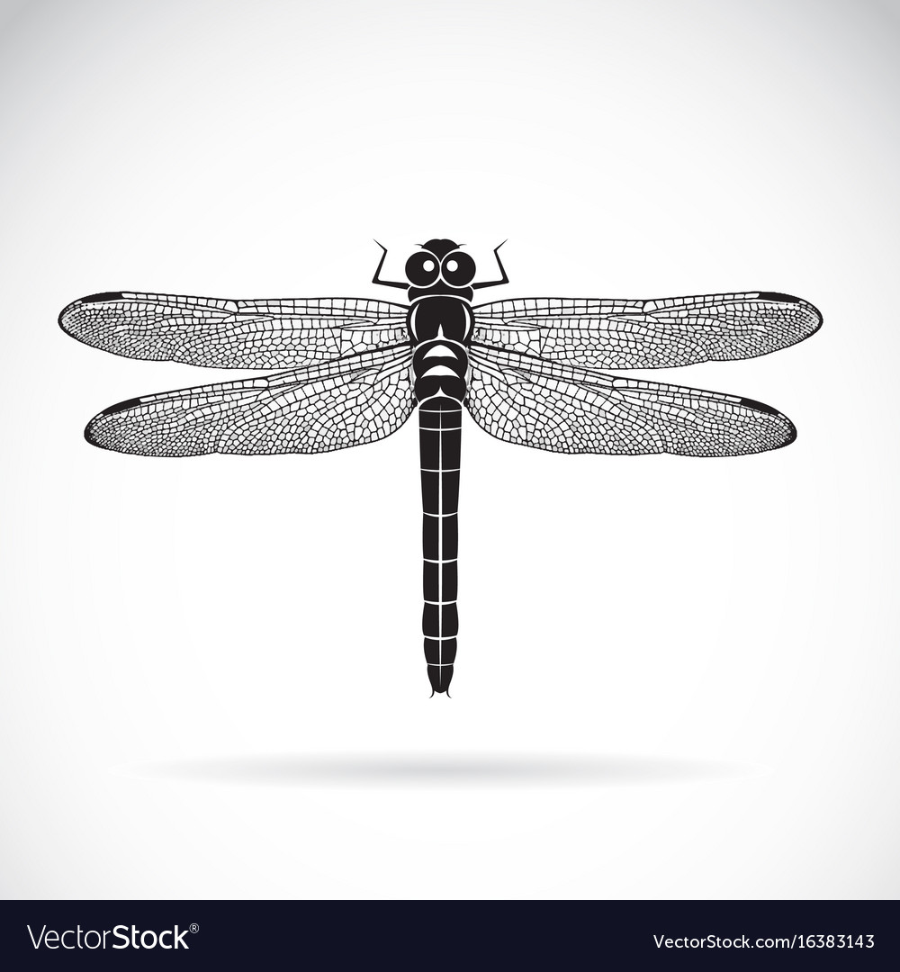 Dragonfly on white background insect animal