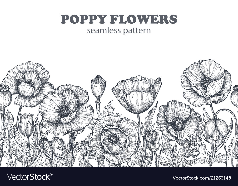 Floral seamless pattern with hand drawn poppy