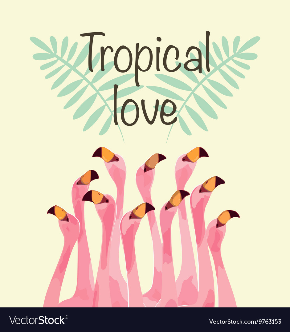 Flamingo for tropical love