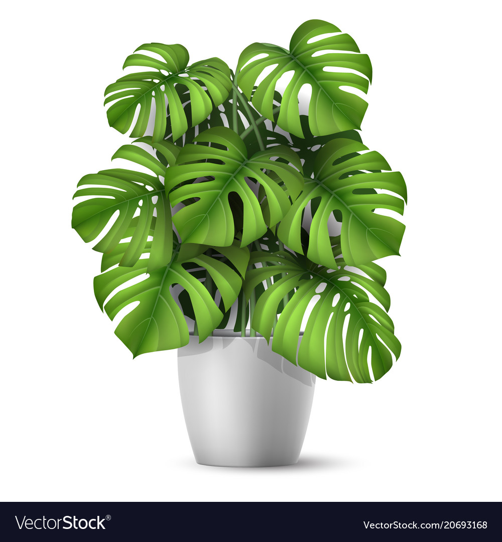Realistic monstera in a pot