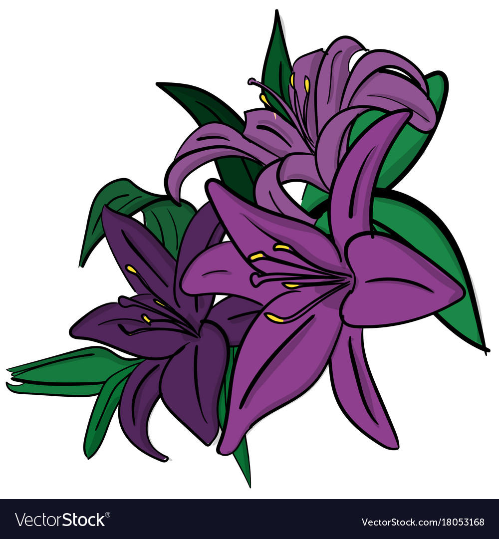 Three purple lilies with green leaves on a white vector image izmirmasajfo