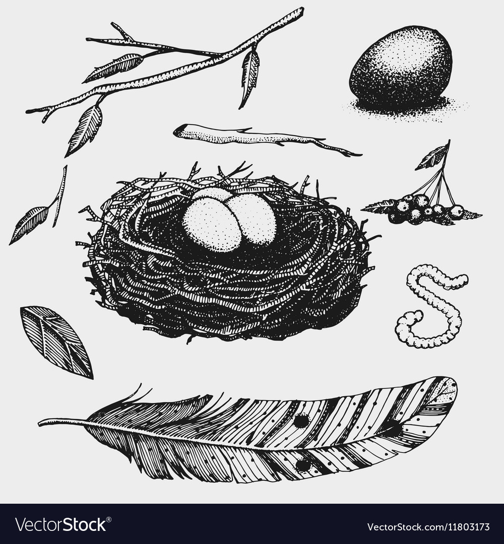 Set of hand drawn nest leaves berry egg and