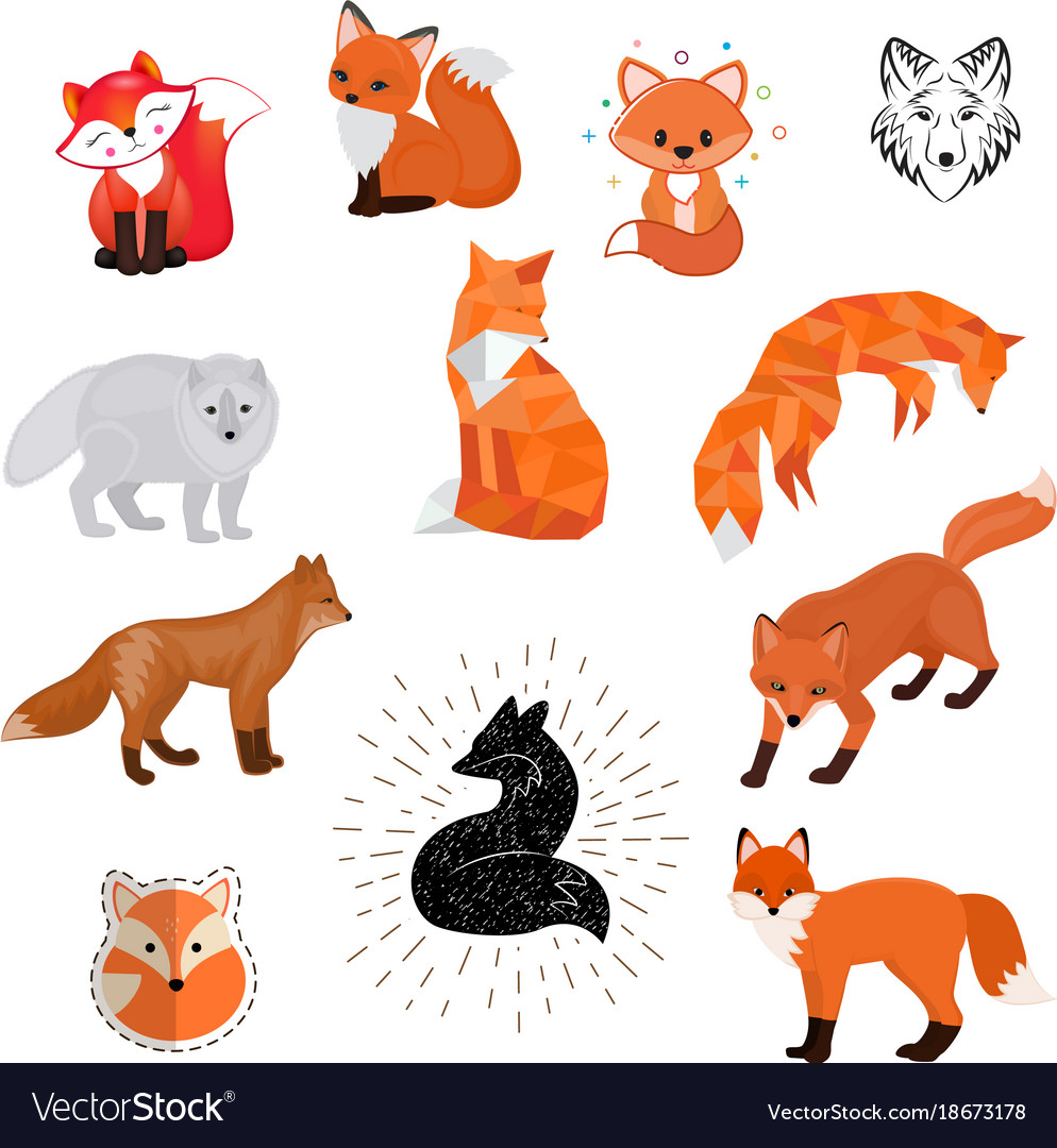 Fox cartoon cute of animal