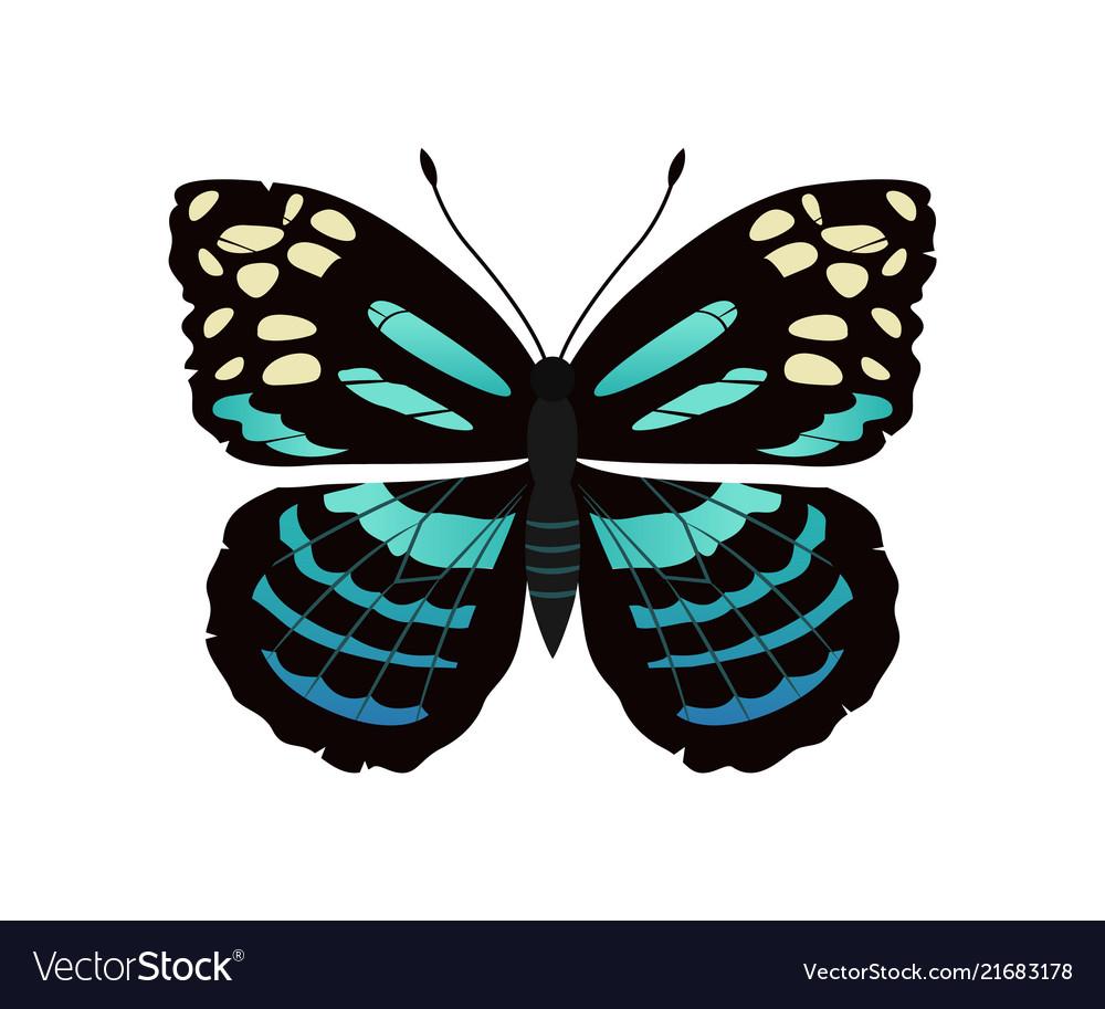Parantica melaneus butterfly