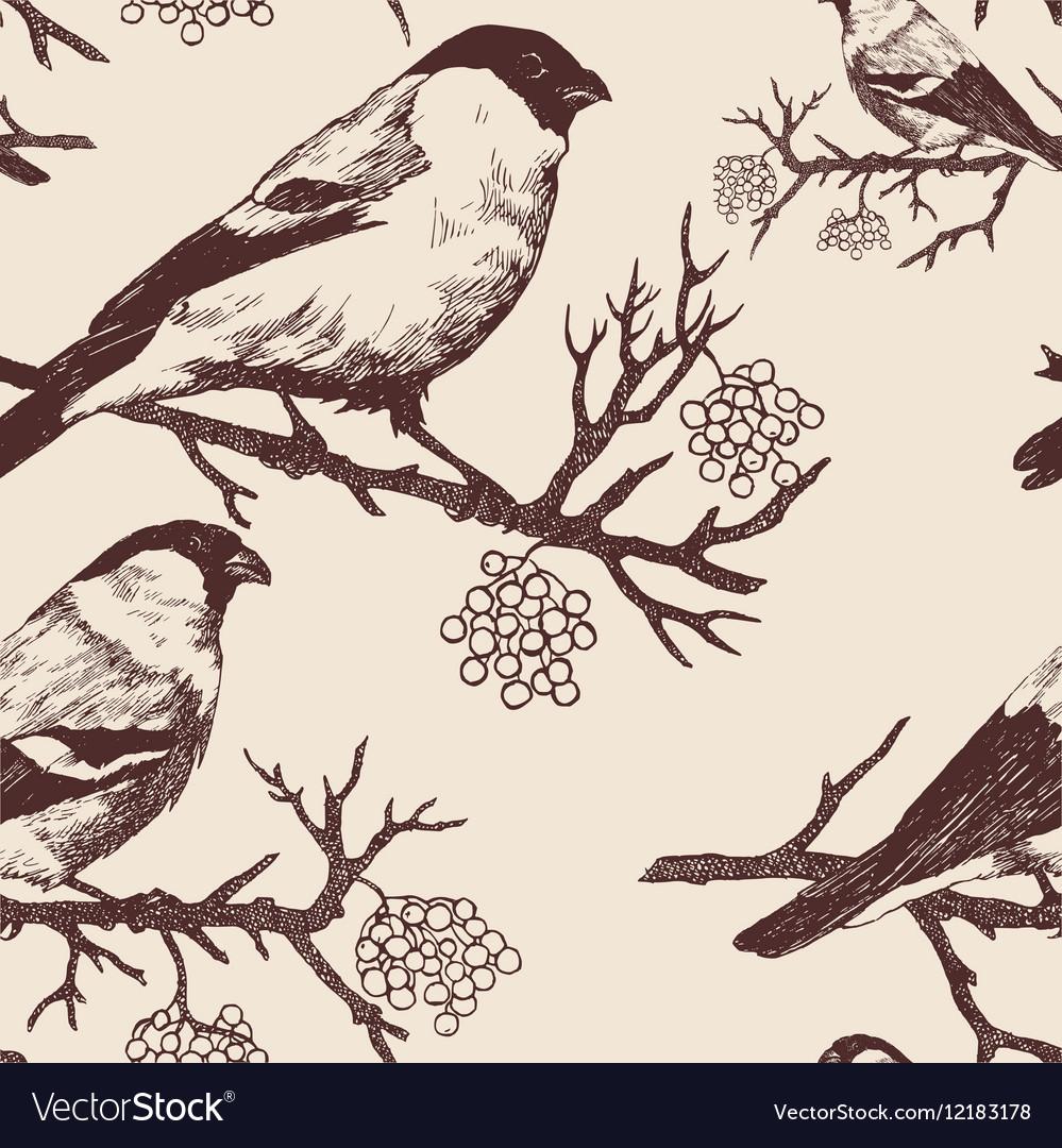 Seamless bullfinch pattern Hand drawn