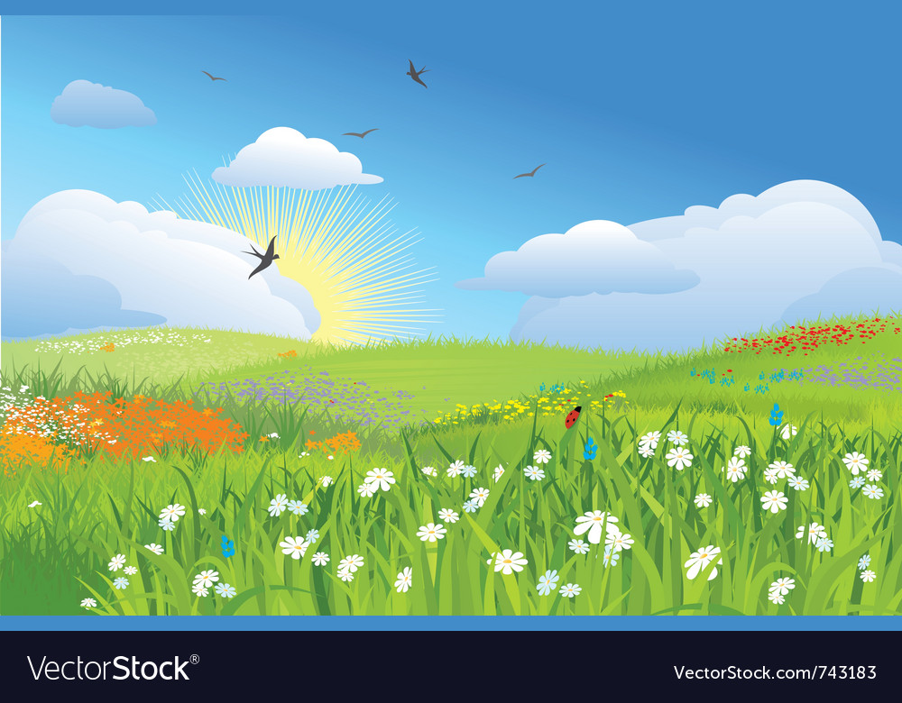 Colorfull meadow flower and grass blue sky