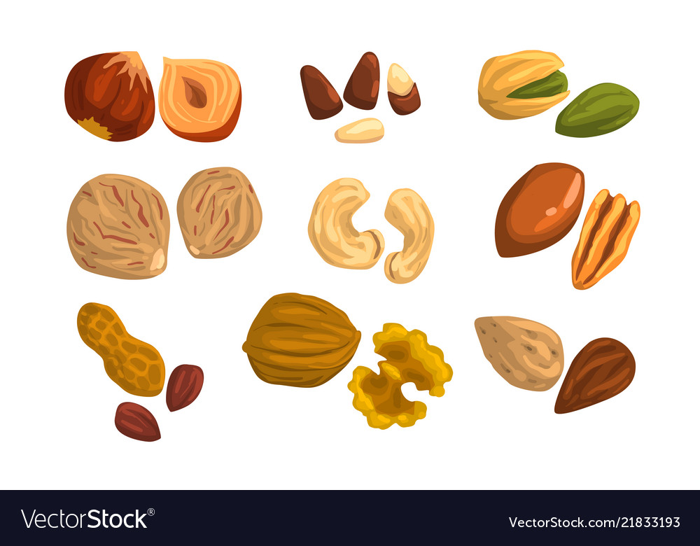 Flat icons of nuts and seeds hazelnut