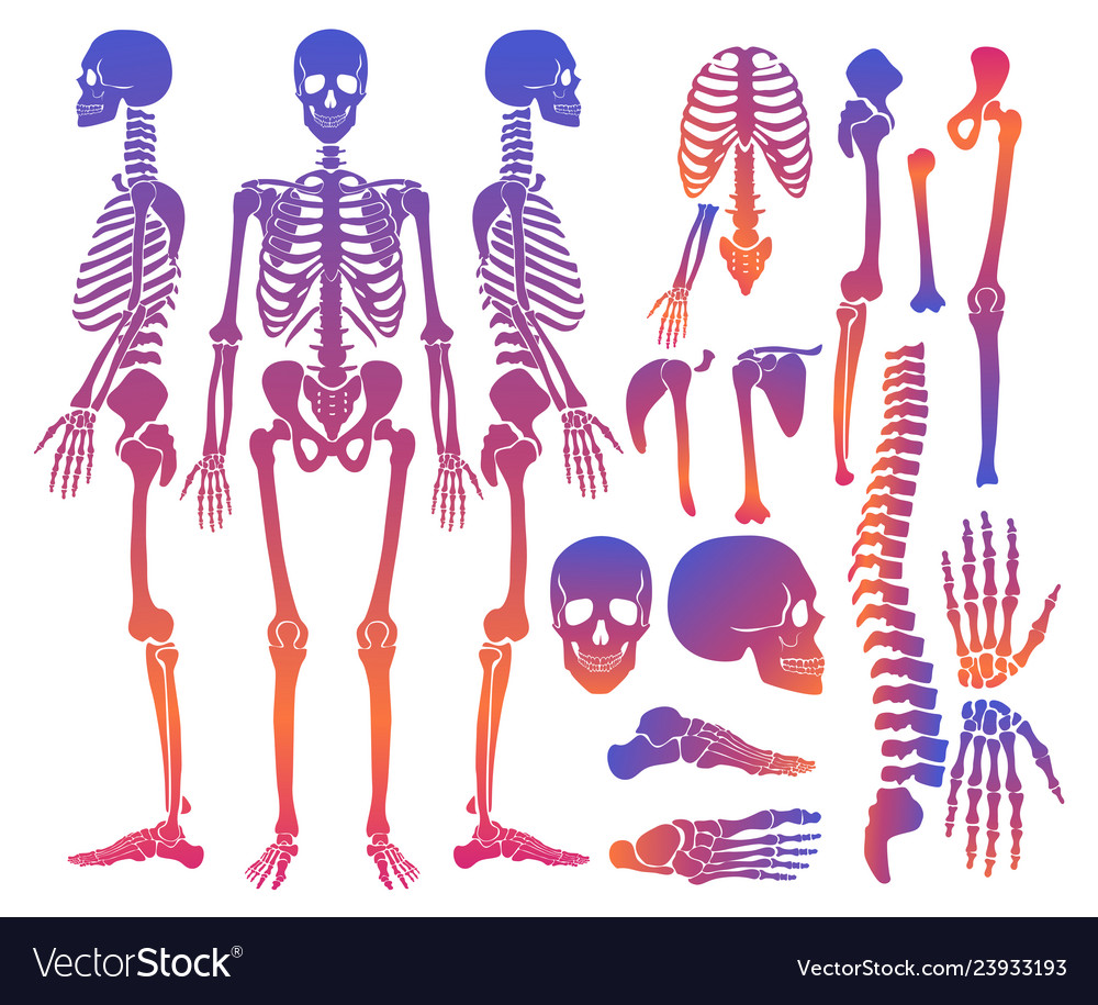 Human bones skeleton silhouette collection set