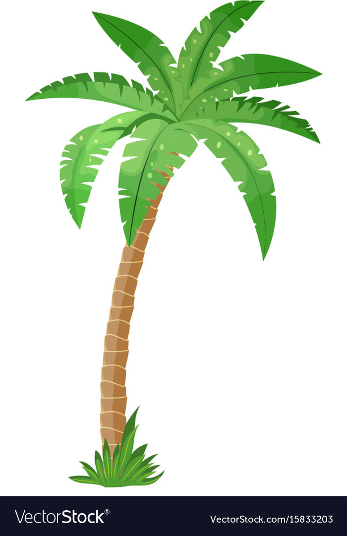 a palm tree royalty free vector image vectorstock rh vectorstock com palm tree vector art free vector palm tree