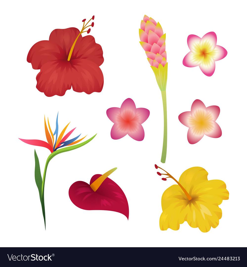 Tropical flower set tropic flowers fashion print