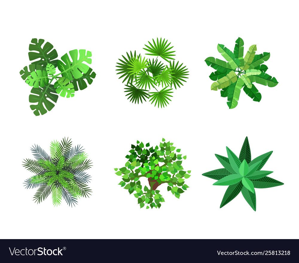 Trees Top View For Architectural Landscape Design Vector Image