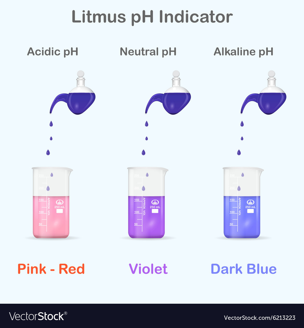 Mesuring of pH with litmus indicator vector image