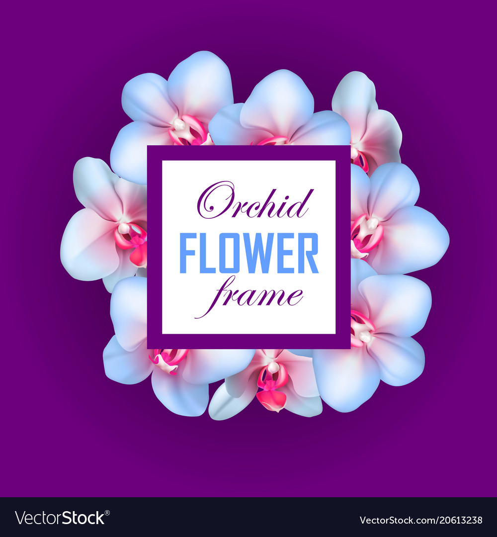 Orchid square frame violet background