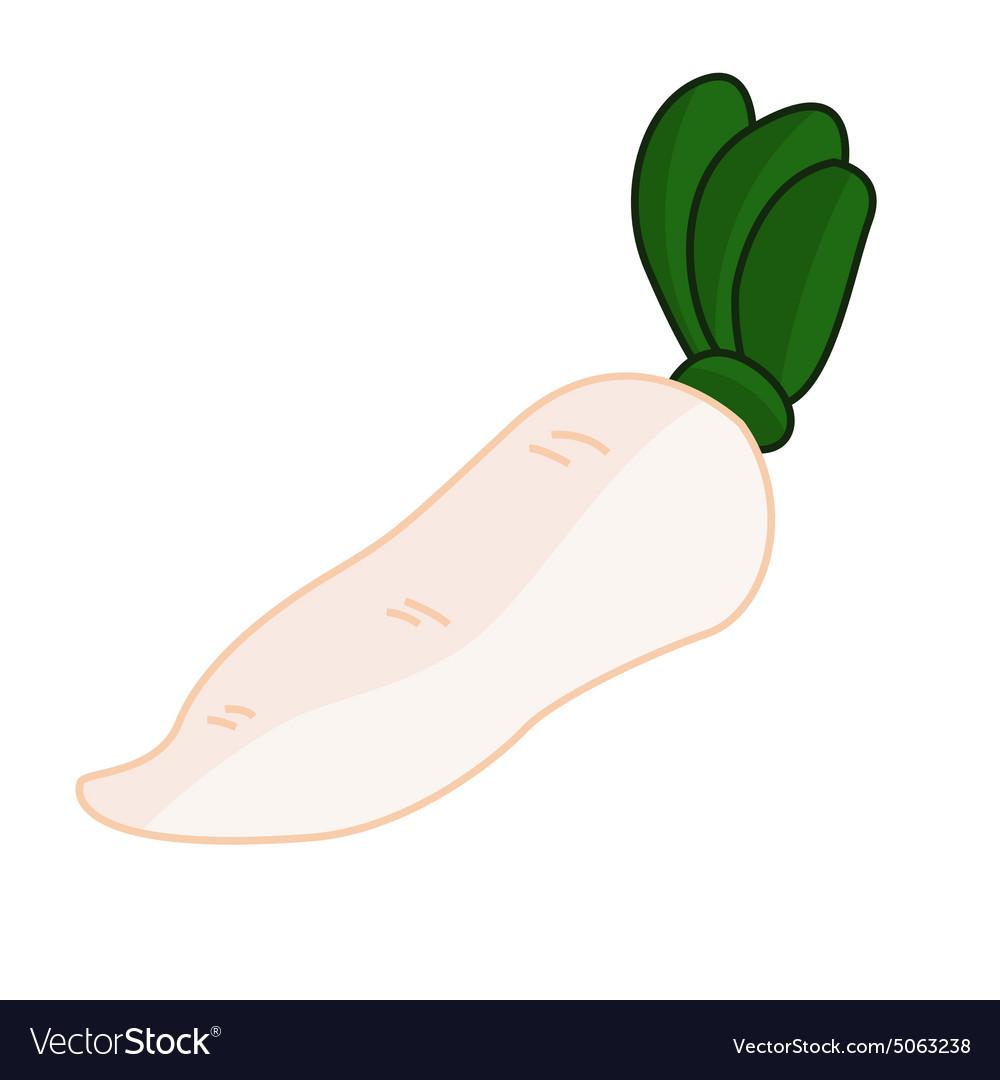 White radish vector image