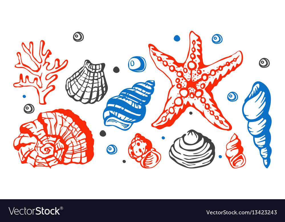 Sea marine shells hand drawn sketch