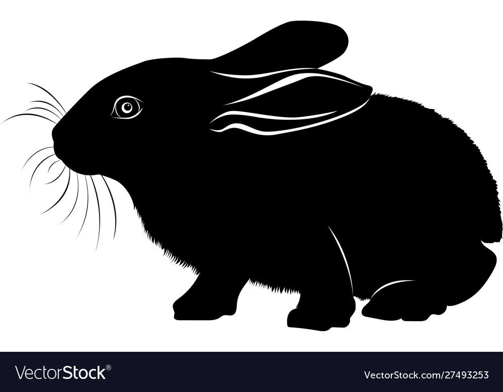 Animal bunny hare black silhouette